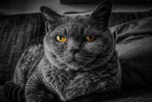 cataracta pisica